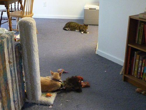 Cats_2